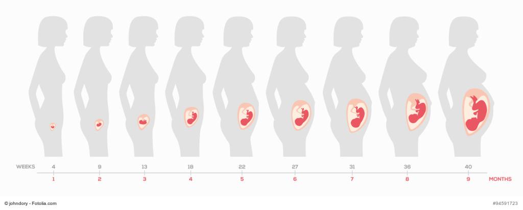 21 schwangerschaftswoche welcher monat