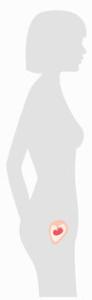 SSW - Schwangerschaftswoche 5 bis 9